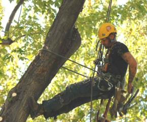 Elagueur entretien arbres gazon pelouse de vienne for Entretien jardin chatellerault